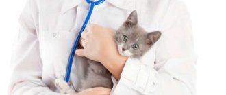 Ветеринар это кто
