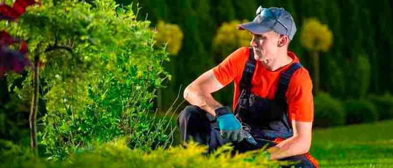 Садовник кто это такой